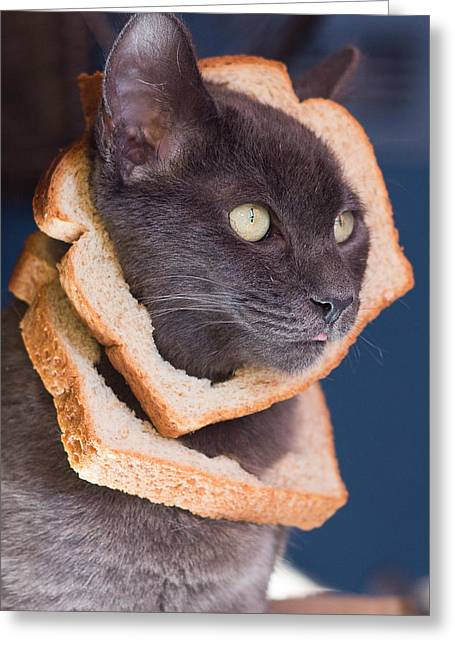 Cat Breading Sandwich  Greeting Card by Kittysolo Photography