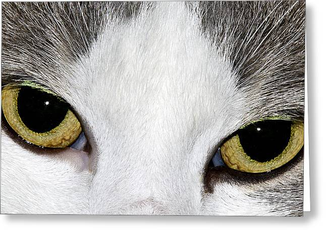 Greeting Card featuring the photograph Cat Eyes by David Lester