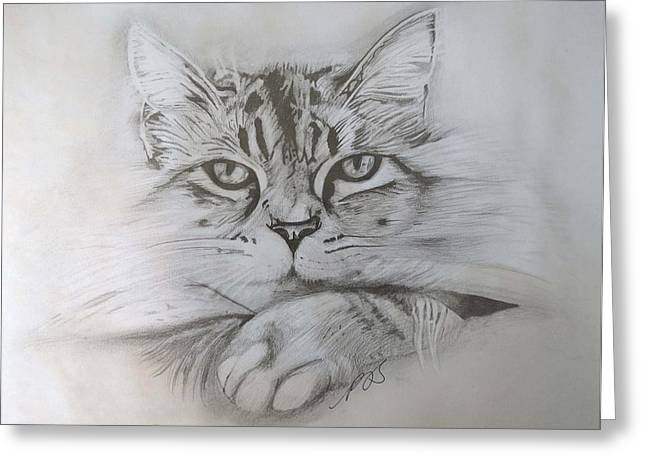 Cat I. Greeting Card by Paula Steffensen