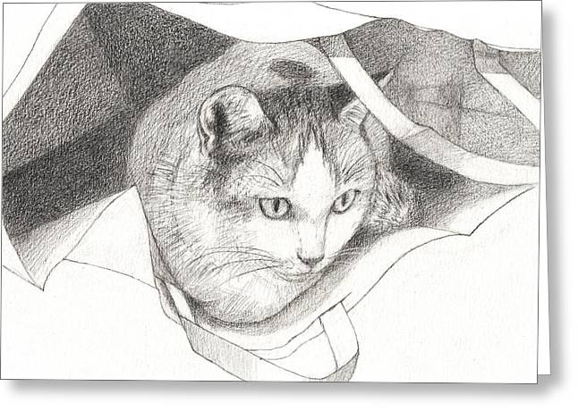 Cat In A Bag Greeting Card