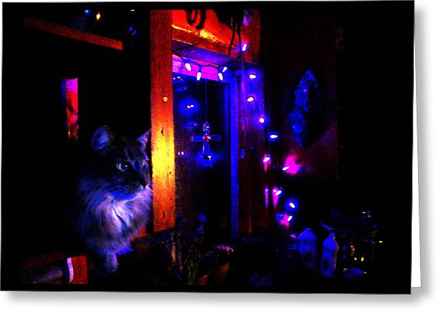 Greeting Card featuring the photograph Cat In The Night Kitchen by Susanne Still