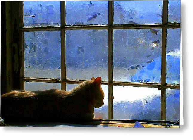 Cat In The Window Greeting Card by Randall Weidner