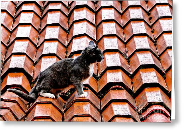 Cat On A Hot Tile Roof Greeting Card by Al Bourassa
