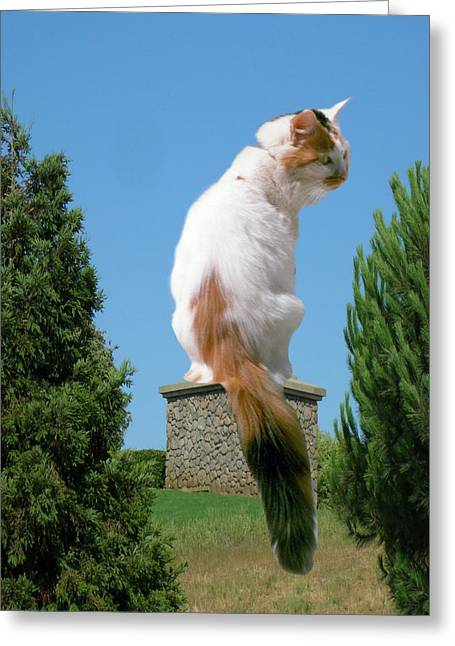 Greeting Card featuring the photograph Cat On Pedestal by Bonnie Muir