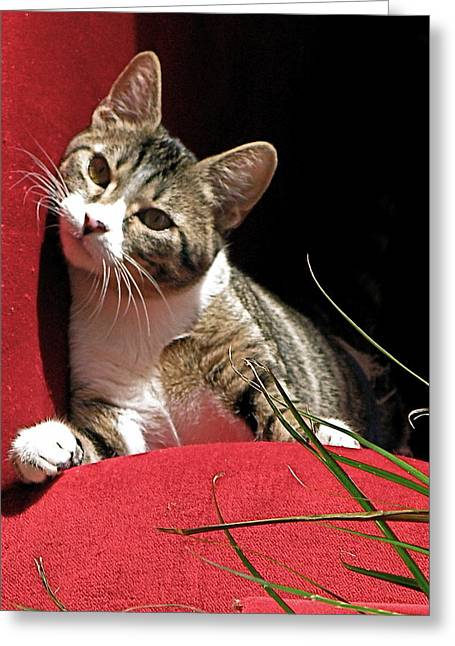 Cat On Red Greeting Card by Inga Smith