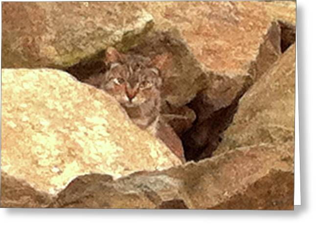 Cat On The Rocks Greeting Card