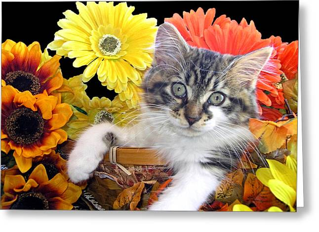 Cat Power - Sassy Kitten Hanging Out While Staring At Me - Thanksgiving Kitty - Falltime Flowers Greeting Card by Chantal PhotoPix