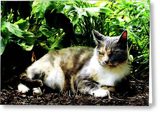 Cat Relaxing In Garden Greeting Card by Susan Savad