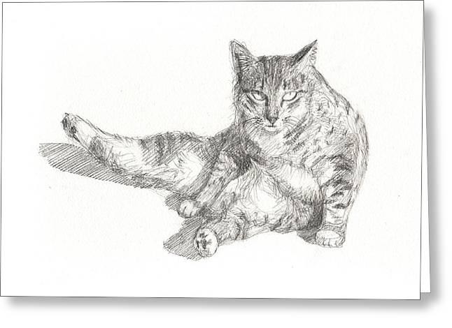 Cat Sitting Greeting Card