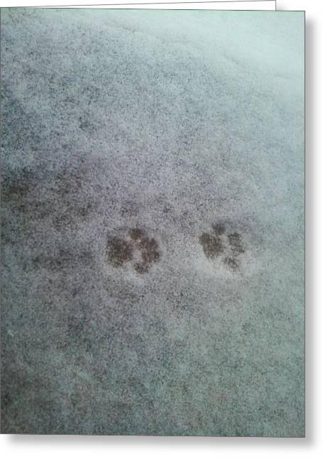 Greeting Card featuring the photograph Cat Tracks In The Snow by Gerald Strine