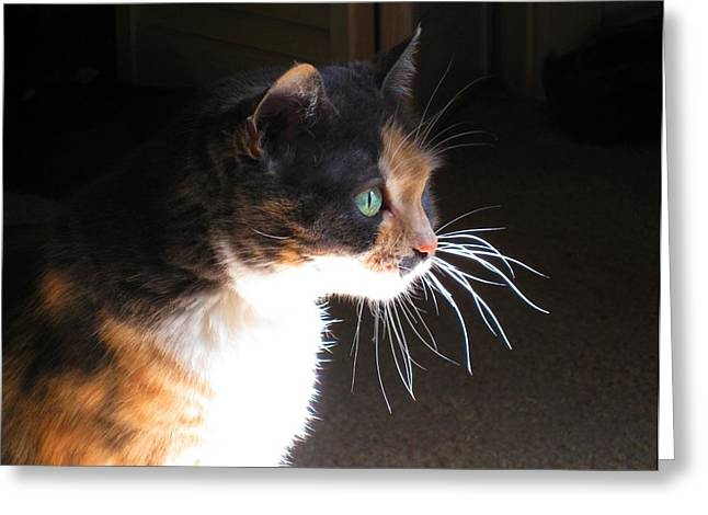 Cat Whiskers Greeting Card by Sue Halstenberg