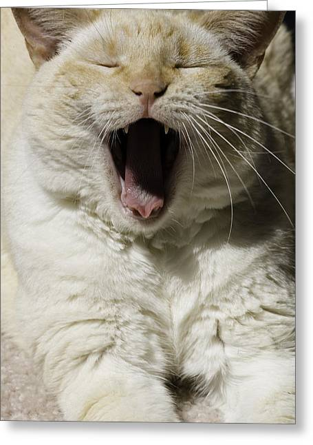 Cat Yawn Greeting Card