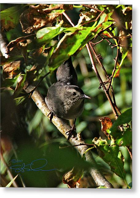Catbird Greeting Card