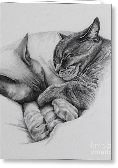 Catching Some Shuteye Greeting Card by Margit Sampogna