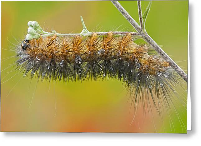 Caterpillar On A Rainy Day Greeting Card by Bonnie Barry