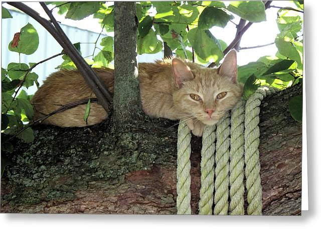 Greeting Card featuring the photograph Catnap Time by Thomas Woolworth