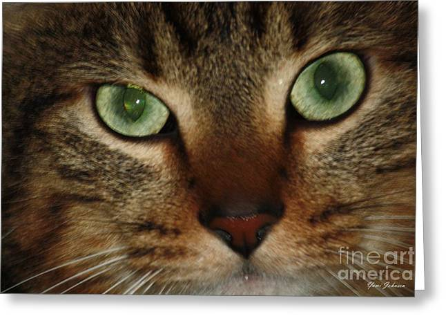 Greeting Card featuring the photograph Cat's Eye by Yumi Johnson