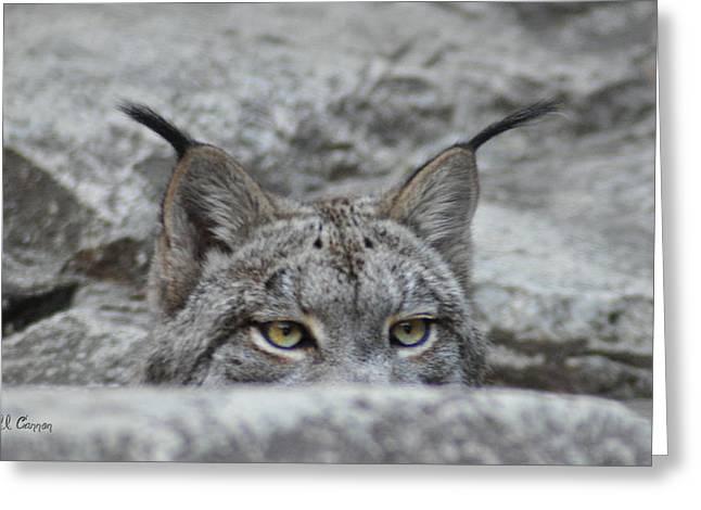 Cats Eyes - Lynx Greeting Card