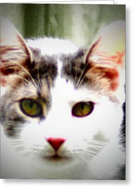 Cats Meow Greeting Card by Bill Cannon