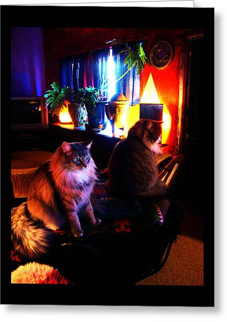 Greeting Card featuring the photograph Cats On A Drum by Susanne Still