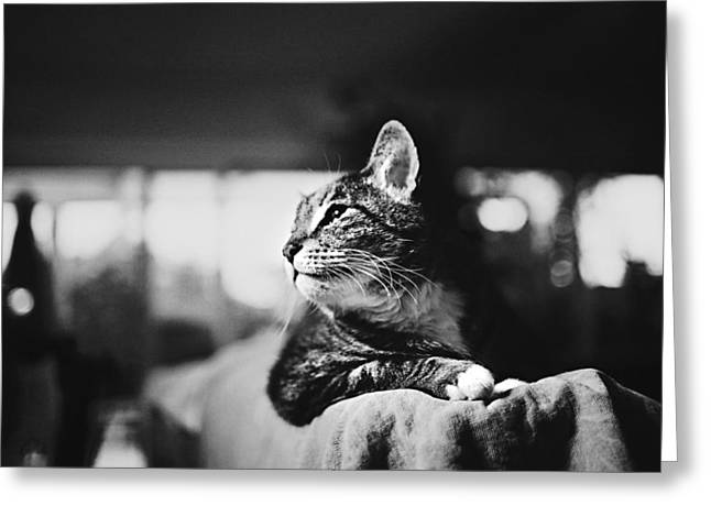 Cats Portrait Greeting Card by Sumit Mehndiratta