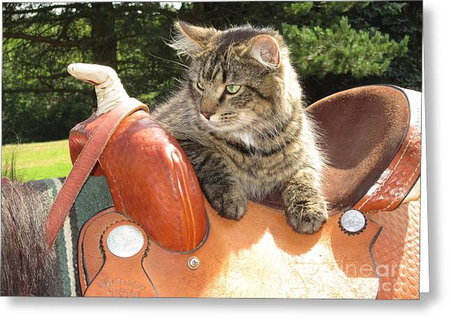 Cats Ride Free Greeting Card