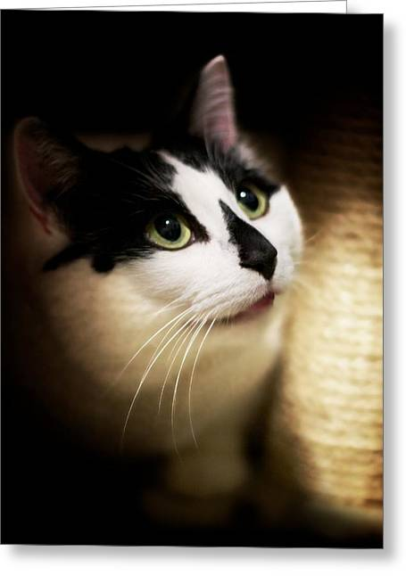 Catsablanca Greeting Card by JM Photography
