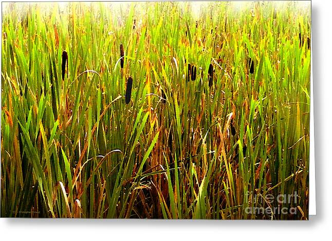 Cattails 2 Greeting Card by Cristophers Dream Artistry