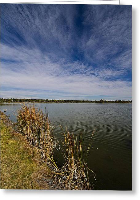 Cattails Against Colorado Blue Greeting Card by KatagramStudios Photography