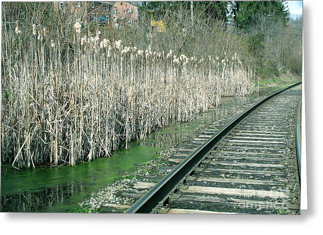Cattails By The Tracks Greeting Card