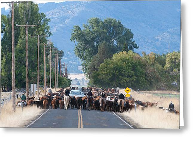 Greeting Card featuring the photograph Cattle Drive 2 by Gary Rose