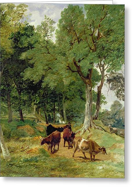 Cattle On A Devonshire Greeting Card by T S Cooper and F R Lee