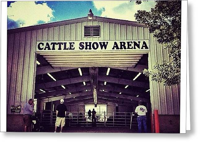 Cattle Show Arena Greeting Card