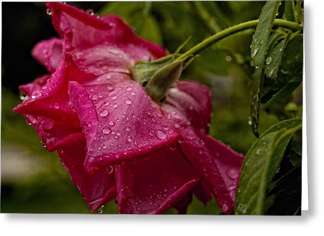 Caught In The Rain Greeting Card by Barbara Middleton