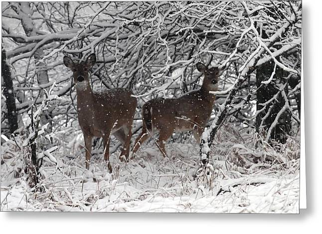 Greeting Card featuring the photograph Caught In The Snow Storm by Elizabeth Winter