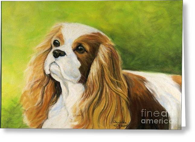 Cavalier King Charles Spaniel  Greeting Card by Charlotte Yealey