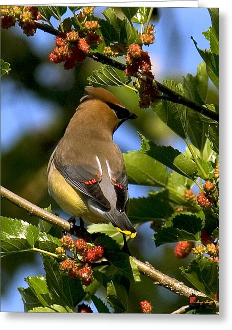 Greeting Card featuring the photograph Cedar Waxwing Dsb056 by Gerry Gantt