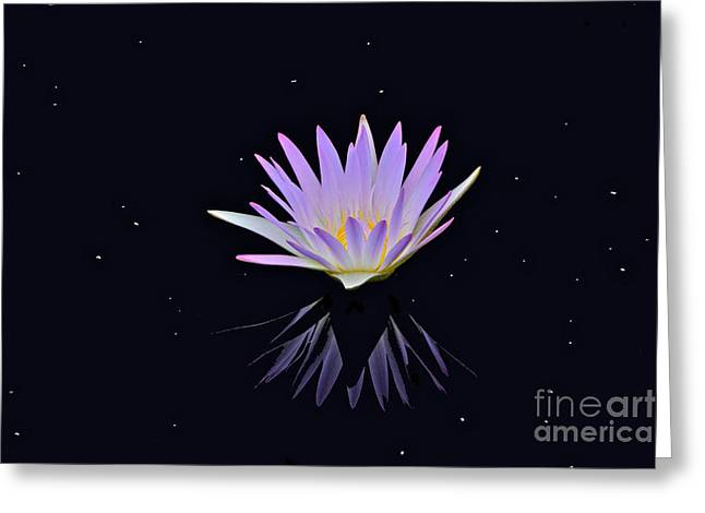 Celestial Waterlily Greeting Card