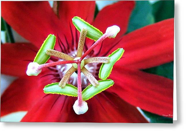 Greeting Card featuring the photograph Centerpiece  Passion Flower 001 by George Bostian