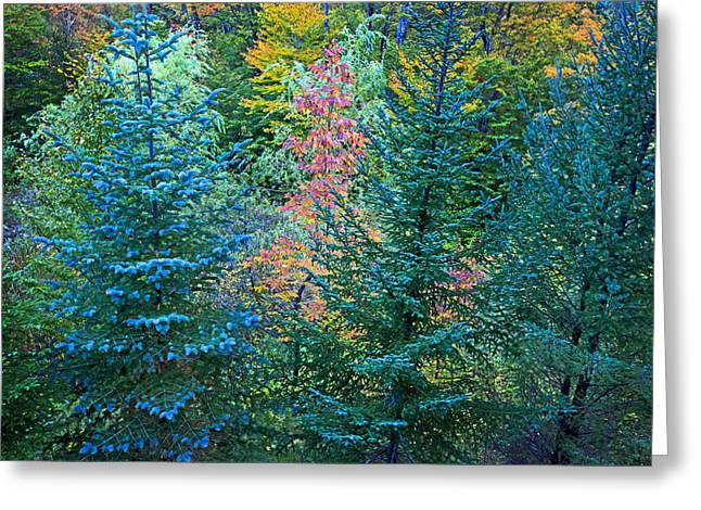 Changing Colors Greeting Card by James Steele