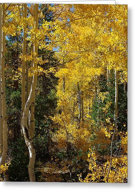 Greeting Card featuring the photograph Changing Seasons by Vicki Pelham