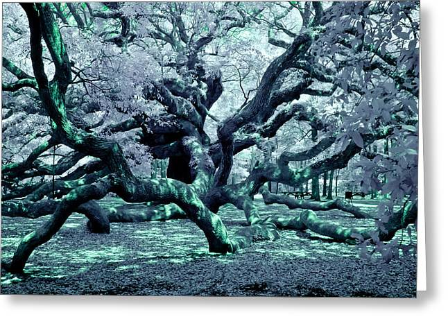 Greeting Card featuring the photograph Charleston's Angel Oak by Louis Dallara