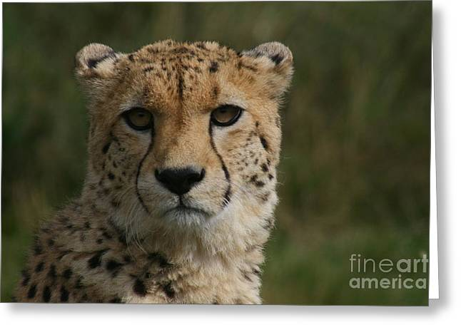 Charlie The Cheeta Greeting Card by Carol Wright