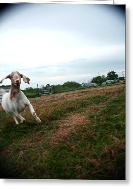 Greeting Card featuring the photograph Chased By A Crazy Goat by Lon Casler Bixby