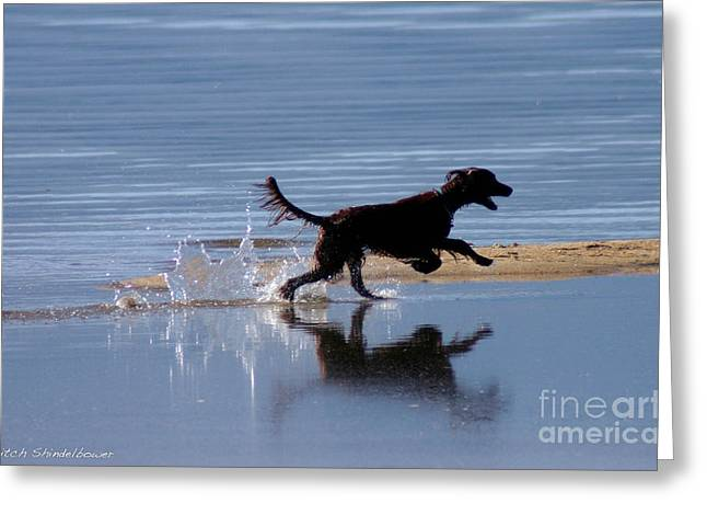 Greeting Card featuring the photograph Chasing Reflections by Mitch Shindelbower