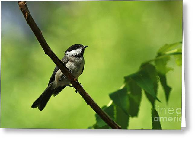 Cheerful Expression Greeting Card by Inspired Nature Photography Fine Art Photography