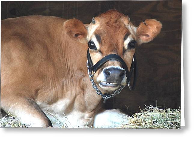 Moos Greeting Cards. Greeting Cards - Cheese Greeting Card by Kathy Gibbons