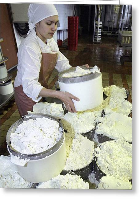 Cheese Production, Mould Filling Greeting Card by Ria Novosti
