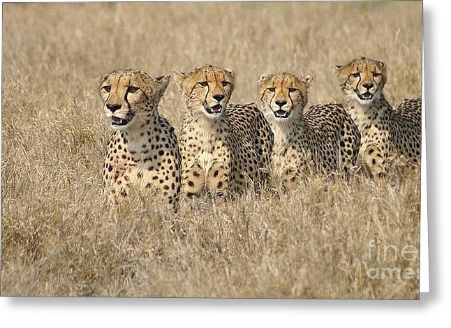 Cheetah Family Greeting Card