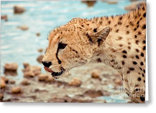 Cheetah Headshot Greeting Card by Darcy Michaelchuk